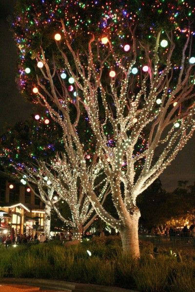 Sparkling lights on landscaping trees' branches